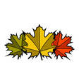 group of fall leaves vector image