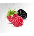 realistic blackberries with raspberries vector image vector image