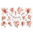 set magnolia flowers buds leaves vector image vector image