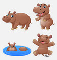cartoon funny hippos collection set vector image vector image