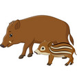 cartoon wild boar and piglet vector image