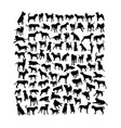 dog animal silhouettes vector image vector image