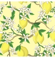 Floral pattern with lemons and white flowers vector image vector image