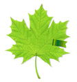 Green Leaf With Ribbon vector image vector image