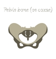 human organ icon in flat style pelvic bones vector image vector image
