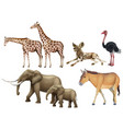 five types of wild animals vector image vector image