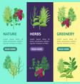 herb banner vecrtical set vector image