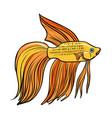 isolated cockerel aquarium fish vector image vector image