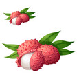 lychee fruit cartoon icon isolated on vector image vector image