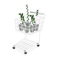A Set of Creeper Plant in A Shopping Cart vector image vector image