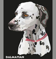 coloful portrait of dalmatian vector image vector image