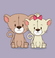 cute little cats couple characters vector image