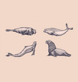 fur seal steller sea lion and walrus ribbon and vector image vector image