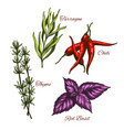 sketch icons of spices and herbal vector image