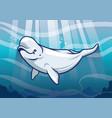 beluga whale in the ocean vector image vector image