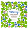 bilberry elements set on white background vector image vector image