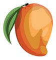 cartoon of a orange and yellow mango fruit with vector image vector image