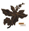 coffee branch gold hatch 2 vector image vector image