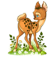 cute young deer on white background vector image