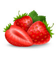 fresh ripe strawberry vector image