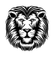 Lion head vector image vector image