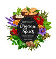 organic of spices and herbal seasonings vector image vector image