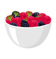 raspberries and blackberries big pile of fresh vector image vector image