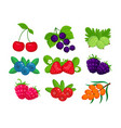 set of garden berries isolated vector image vector image