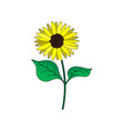 sunflower with green leaves in flat style vector image