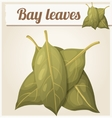 Bay leaves Detailed Icon vector image