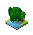 green willow tree isometric 3d icon vector image