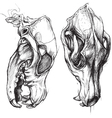 Dog Skull vector image vector image