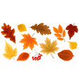 set gold autumn leaves vector image vector image