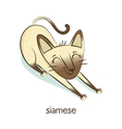 Siamese Cat character isolated on white vector image