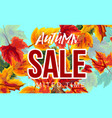 autumn sale banner with leaves vector image vector image