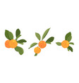 clementine tangerine mandarin ripe orange citrus vector image