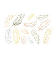 feather bird hand drawn designer elements set vector image