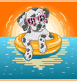 dog swim on summer vector image vector image