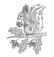 squirrel doodle coloring book page antistress vector image vector image