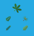 flat icon natural set of leaves rosemary maple vector image vector image