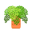 adiantum house plant vector image vector image