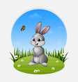 cartoon rabbit standing on the grass vector image vector image