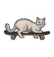 cat on skateboard color sketch engraving vector image