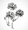 Hand-drawn bouquet of three flowers of peonies vector image vector image
