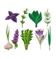 Set of 9 herbs vector image vector image
