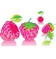 ripe raspberries vector image vector image