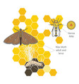 wax moth larvae on an infected bee nest terrible vector image vector image