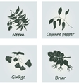 Collection of Ayurvedic Herbs vector image vector image
