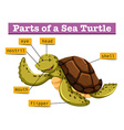 Diagram showing different parts of turtle vector image vector image