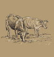 hand drawing cows vector image vector image